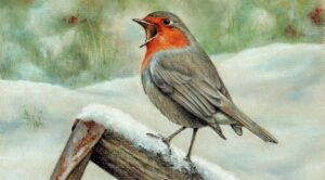 online drawing of a robin